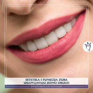 Oblik, veličina i položaj zuba odgovaraju njihovoj funkciji, a samim tim i estetici